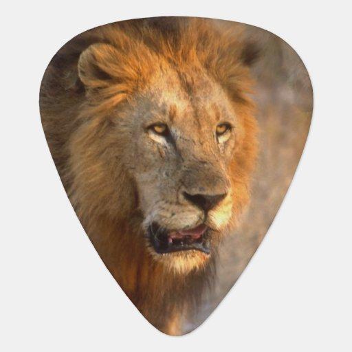 King of Jungle Pick