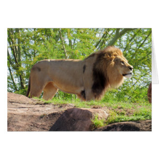 King of the Jungle Greeting Card (Lion)