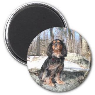 King Of The Rocks Cavalier King Charles Spaniel Magnet