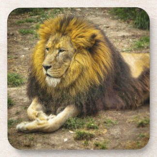 King of the Zoo Coasters