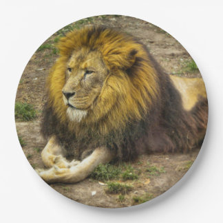 King of the Zoo Paper Plate