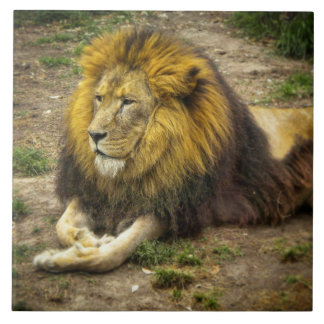 King of the Zoo Photo Tile