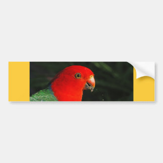 King Parrot Bumper Stickers