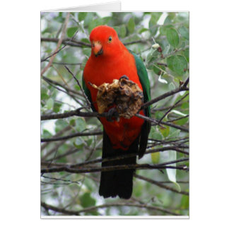 King Parrot Greeting Card