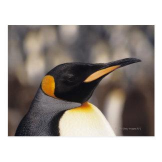 King penguin (Aptenodytes patagonicus) Postcard