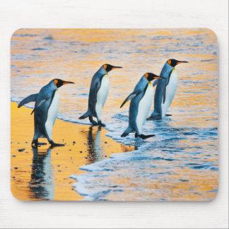 King penguin at sunrise mouse pad