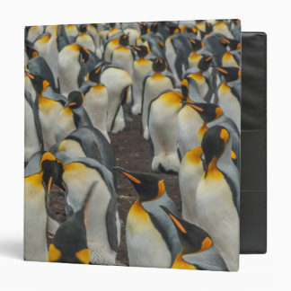 King penguin colony, Falklands 3 Ring Binders