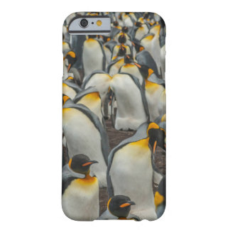 King penguin colony, Falklands Barely There iPhone 6 Case