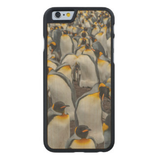 King penguin colony, Falklands Carved® Maple iPhone 6 Case