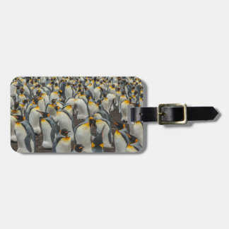 King penguin colony, Falklands Luggage Tag
