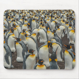 King penguin colony, Falklands Mouse Pad