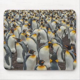 King penguin colony, Falklands Mouse Pad