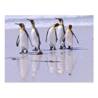 King Penguins at Beach Postcard