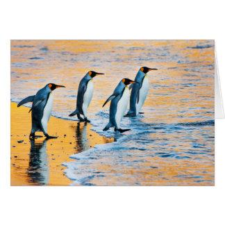 King penguins at sunrise card