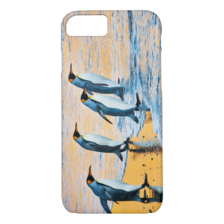 King Penguins at Sunrise iPhone 7 Case