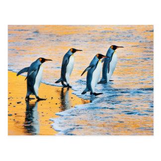 King penguins at Sunrise Postcard