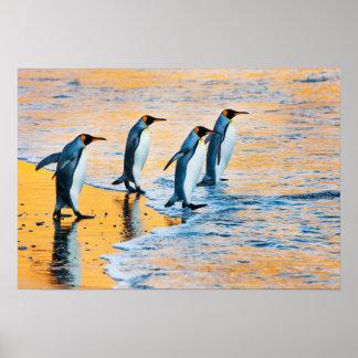 King Penguins at Sunrise poster