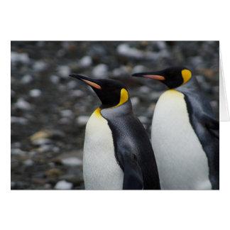 King Penguins Card