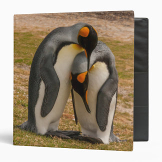 King penguins caressing, Falkland Binder
