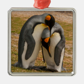 King penguins caressing, Falkland Silver-Colored Square Ornament