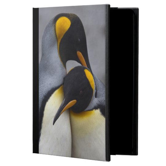 King Penguins in Love iPad Air Case (all versions)
