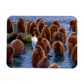 King Penguins - mouse pad Rectangular Photo Magnet