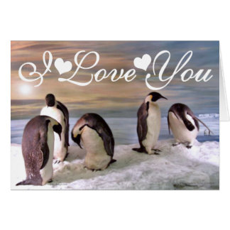 King penguins Photo Image I Love You Card