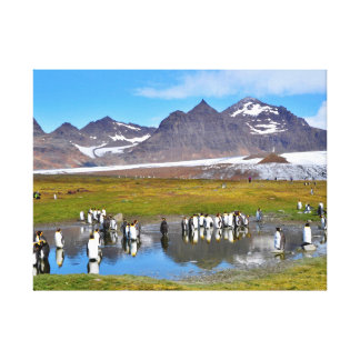 King Penguins Stretched Canvas Print