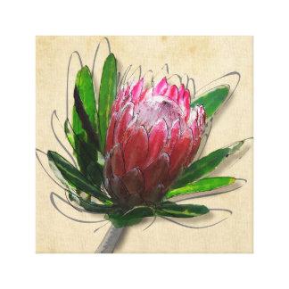 King Protea Flower Canvas Print