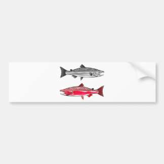 King Salmon. Silver and Spawning. Bumper Sticker