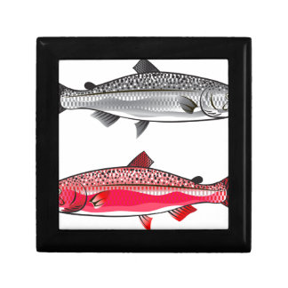 King Salmon. Silver and Spawning. Gift Box