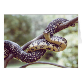 King Snake Card