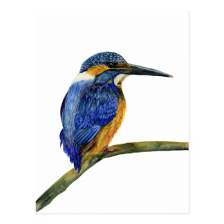 Kingfisher Bird Watercolor Halcyon Bird Postcard