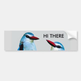 Kingfisher Birds South Africa Bumper Sticker