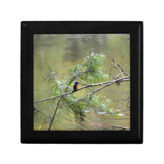 KINGFISHER EUNGELLA NATIONAL PARK AUSTRALIA GIFT BOX