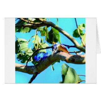 KINGFISHER IN TREE QUEENSLAND AUSTRALIA CARD