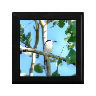 KINGFISHER IN TREE QUEENSLAND AUSTRALIA GIFT BOX