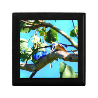 KINGFISHER IN TREE QUEENSLAND AUSTRALIA KEEPSAKE BOX