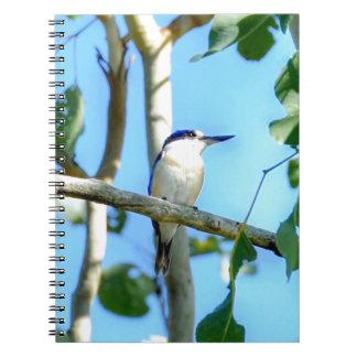KINGFISHER IN TREE QUEENSLAND AUSTRALIA NOTEBOOKS
