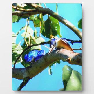 KINGFISHER IN TREE QUEENSLAND AUSTRALIA PLAQUE
