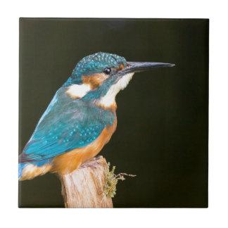 Kingfisher on a stick ceramic tile