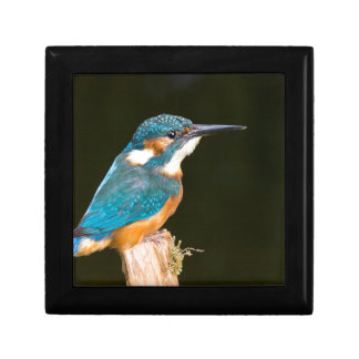 Kingfisher on a stick gift box