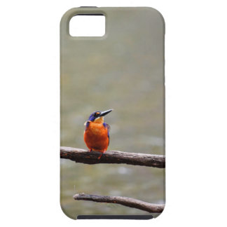 KINGFISHER QUEENSLAND AUSTRALIA CASE FOR THE iPhone 5