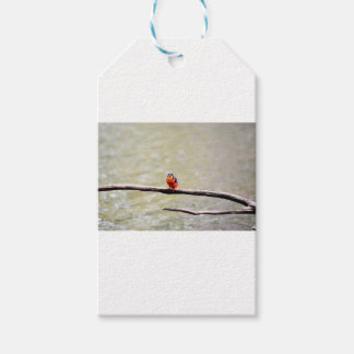 KINGFISHER QUEENSLAND AUSTRALIA PACK OF GIFT TAGS
