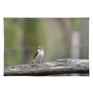 KINGFISHER QUEENSLAND AUSTRALIA PLACEMAT