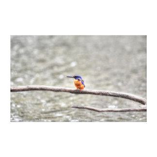 KINGFISHER QUEENSLAND AUSTRALIA WITH ART EFFECTS CANVAS PRINT
