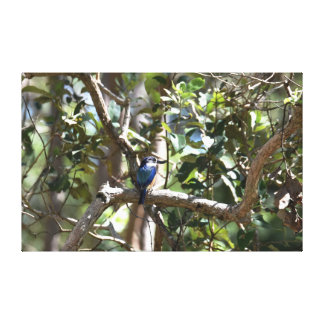 KINGFISHER RURAL QUEENSLAND AUSTRALIA CANVAS PRINT