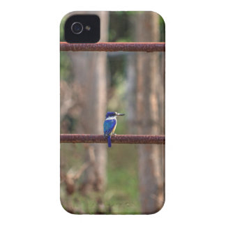 KINGFISHER RURAL QUEENSLAND AUSTRALIA iPhone 4 COVER
