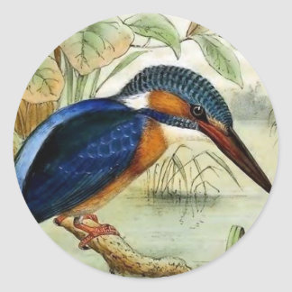 Kingfisher Vintage Bird Illustration Classic Round Sticker