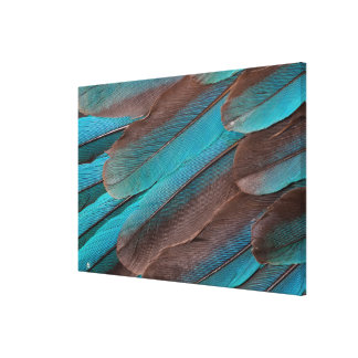 Kingfisher Wing Feathers Canvas Print